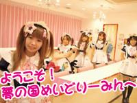 メイドカフェ&バー めいどりーみん 2周年イベント開催